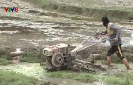 Nông dân Nghệ An tập trung phòng chống rét đậm, rét hại