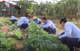 Hỗ trợ lao động vùng khó khăn xuất cảnh Hàn Quốc - Nhật Bản