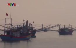 Các tổ nghiệp đoàn đoàn nghề cá Quảng Ngãi liên kết