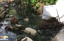 Trang trại chăn nuôi xả thải ra môi trường, gây ô nhiễm nghiêm trọng
