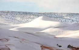 Tuyết rơi dày bao phủ sa mạc Sahara