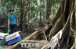 Kon Tum: Thả 27 cá thể động vật hoang dã về môi trường tự nhiên