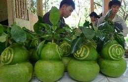 Trái cây tạo hình giảm 70%