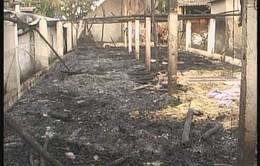 Đăk Nông: 1.200 con lợn của một trang trại bị chết cháy do chập điện