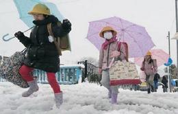 Tokyo (Nhật Bản) đón đợt tuyết rơi dày trong ngày 23 - 24/1