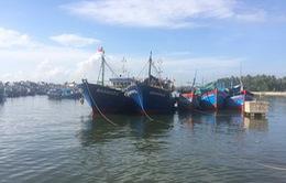 """Bình Định: Ngư dân chưa đạt được thỏa thuận đền bù """"tàu cá 67"""""""