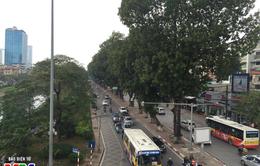 Hà Nội di dời cây xanh mở rộng mặt đường tại nhiều tuyến phố