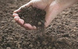 Ireland: Dùng đất để chữa bệnh