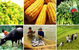 Bộ NN&PTNT ban hành thông tư 13 sản phẩm nông nghiệp chủ lực quốc gia