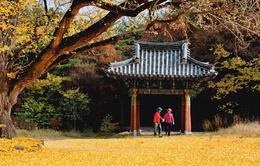 """Khám phá 4 mùa rực rỡ của """"thiên đường du lịch"""" Gyeongsangbuk"""