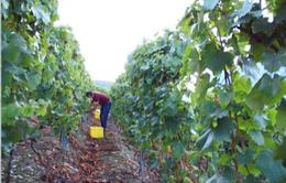 Ngành nông nghiệp châu Âu dịch chuyển do biến đổi khí hậu