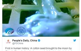 Hạt giống đầu tiên nảy mầm trên Mặt Trăng
