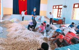 Hỗ trợ nông dân tiêu thụ hành tỏi Lý Sơn bị tồn đọng