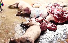 Ngang nhiên giết mổ lợn chết, lở mồm long móng bán vào xưởng làm thịt khô