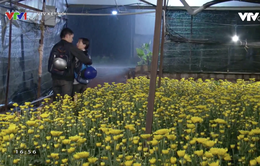 """""""Hoa cúc vàng trong bão"""" nối sóng """"Cung đường tội lỗi"""" từ 5/1 trên VTV3"""