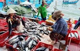 """Ngư dân Khánh Hòa có tiền sắm Tết nhờ """"được mùa"""" cá ngừ"""