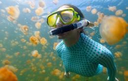 Lạc vào tiên cảnh khi bơi giữa hồ sứa Paula