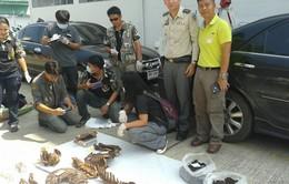 Thái Lan bắt 2 người Việt nghi săn trộm hổ