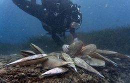 Biểu tượng dưới nước của Địa Trung Hải bị đe dọa hủy hoại