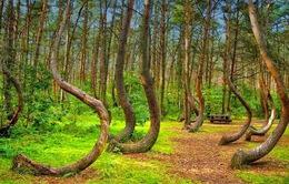 Bí ẩn về khu rừng có hàng trăm gốc cây bị uốn cong một cách khó hiểu