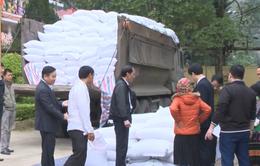 Cấp phát hàng nghìn tấn gạo hỗ trợ người nghèo đón Tết