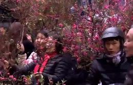 Chợ hoa truyền thống phố cổ Hà Nội