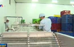 CPTPP có hiệu lực: Dòng vốn FDI vào nông nghiệp Việt có cơ hội khơi thông