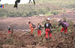 Vỡ đập ở Brazil: Chạy đua với thời gian tìm kiếm người mất tích