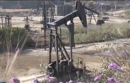 Thị trường dầu bị ảnh hưởng từ lệnh trừng phạt của Mỹ lên Venezuela