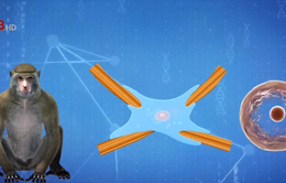Trung Quốc nhân bản khỉ chỉnh sửa gen phục vụ nghiên cứu y học