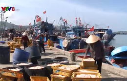 """Cận Tết, ngư dân Quảng Ngãi trúng đậm """"lộc biển"""""""