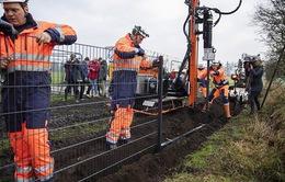 Đan Mạch dựng hàng rào biên giới phòng dịch tả lợn châu Phi