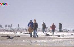 Gần 300 container hàng hóa rơi xuống khu vực Biển Bắc