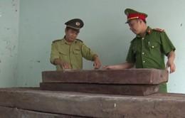 Liên tiếp phát hiện các vụ vận chuyển lâm sản trái phép tại Bình Định