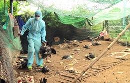 2 trường hợp bị viêm phổi nặng nghi ngờ nhiễm cúm A/H5N1