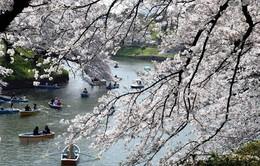 Nhật Bản bắt đầu thu thuế xuất cảnh