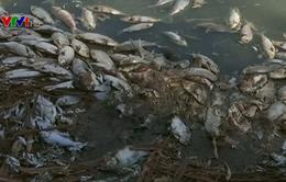Cá chết hàng loạt ở Australia