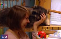 Giúp giảm căng thẳng nhờ liệu pháp gấu mèo