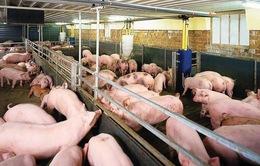 Gia Lai: Thêm 10 dự án đầu tư vào lĩnh vực chăn nuôi