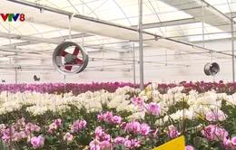 Trồng hoa chất lượng cao thích ứng với biến đổi khí hậu