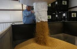 Trung Quốc thu mua 1 triệu tấn đậu nành Mỹ