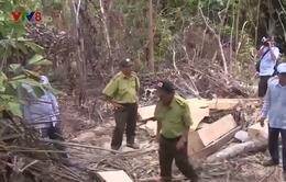 Phát hiện vụ phá rừng tự nhiên ở Phú Yên