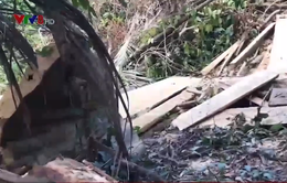 Điều tra thủ phạm phá rừng tại Hòn Đác, Phú Yên