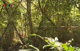 Bình Định: Phát huy vai trò người dân trong quản lý bảo vệ rừng