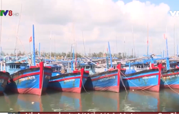 Nam Trung Bộ đẩy nhanh tiến độ lắp đặt thiết bị giám sát tàu cá