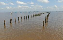 Hàng trăm cọc vô chủ giăng bẫy tàu ghe ở Vĩnh Long