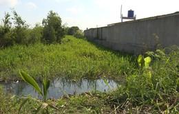 Vĩnh Long: Doanh nghiệp xả thải bức tử môi trường