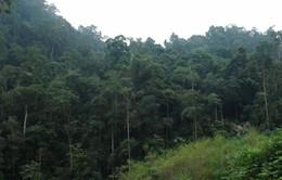 Phát hiện loại kháng sinh mới trong rừng nhiệt đới