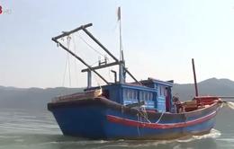 Khánh Hòa: Ngăn chặn khai thác thủy sản tận diệt