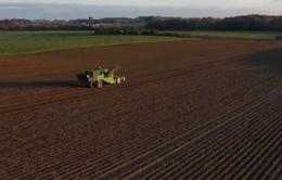 Nông dân Bỉ thu hoạch khoai tây muộn sau mùa hạn hán ngắn
